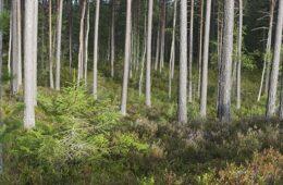 Tag til skovens dag søndag