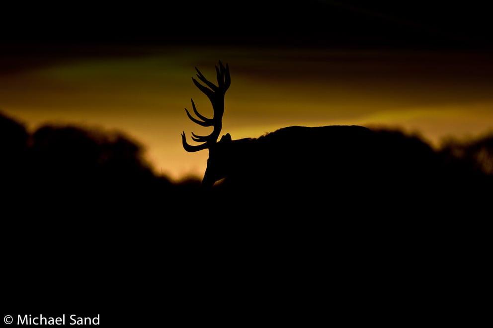 Kronvildt: Nye jagttider