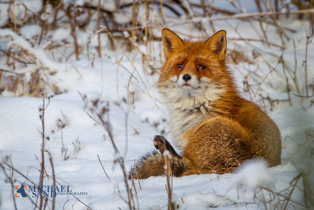 Miljøministrerens store julegave til de danske jægere