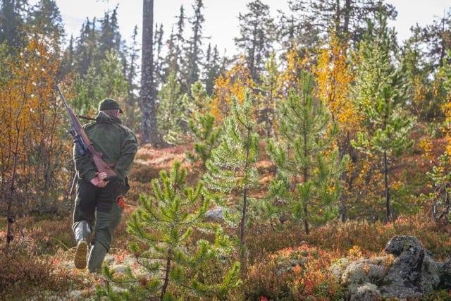 Norge: Nu også hjortejagt på dagskort