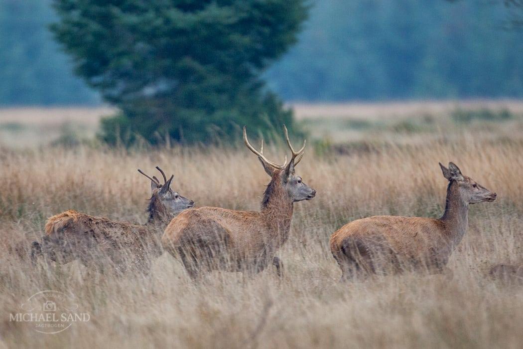 Jagt udlejes af Naturstyrelsen Vendsyssel