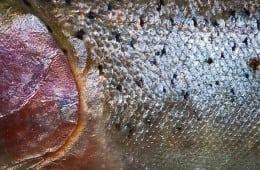 Netto, Føtex og Bilka: Fisk og skaldyr skal være bæredygtige