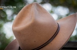 Australien: Buejagt på hjortevildt